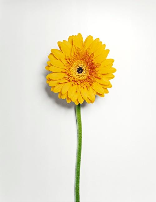 Image tirée de la série Frozen Flowers de Jon Shireman. Tous droits réservés.